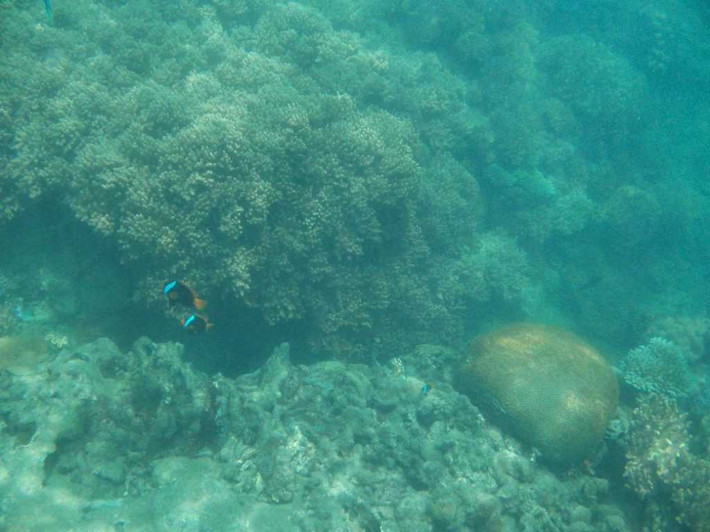 Whitsunday Islands Great Barrier Reef Heart Reef