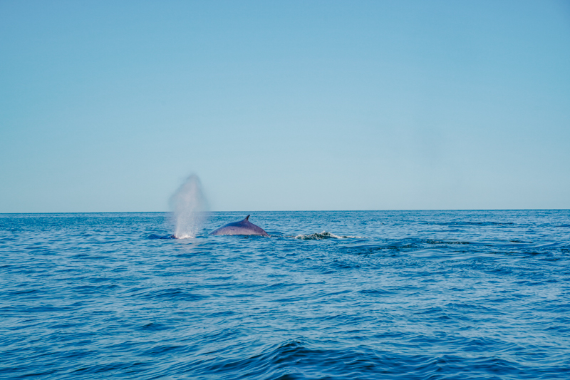 Whale Watching in Nova Scotia